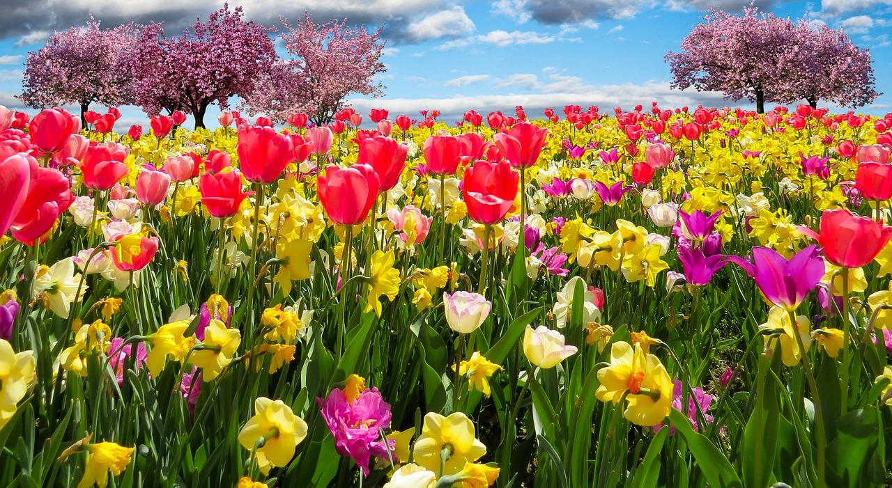 spring-awakening-1197603_1280